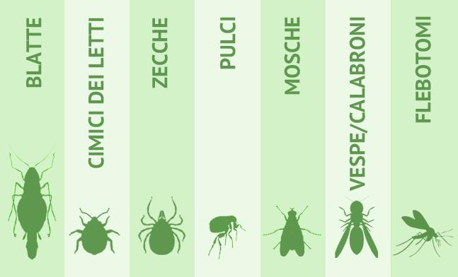 Cimici del letto, blatte, zecche, pulci, mosche, vespe/calabroni, flebotomi